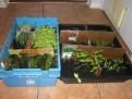 500x375sproutingplants